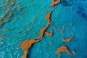 Sargassum algae on the north coast of the island