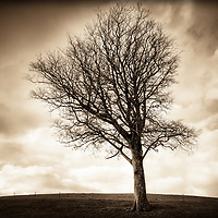 A large lone tree extrudes from the fence line during a dramatic sky.