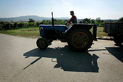 CZECH REPUBLIC MORAVIA DOLNI DUNAJOVICE 10SEP05 - A wineyard worker moves his tractor to collect grapes during the seasonal wine harvest. Southern Moravia's centuries-old traditions in wine growing make it a well-established wine region...jre/Photo by Jiri Rezac..© Jiri Rezac 2005..Contact: +44 (0) 7050 110 417.Mobile:  +44 (0) 7801 337 683.Office:  +44 (0) 20 8968 9635..Email:   jiri@jirirezac.com.Web:     www.jirirezac.com..© All images Jiri Rezac 2005 - All rights reserved.