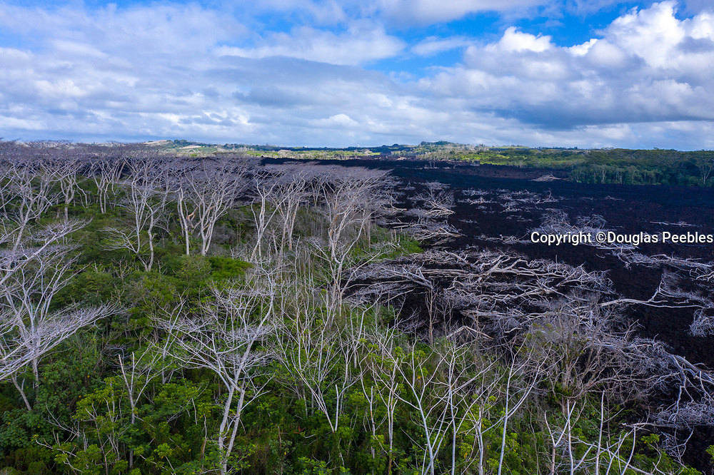 Lava burnt trees, Kilauea Volcano, HVNP, Big Island of Hawaii, Hawaii