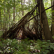 Abandoned Shelter, Dalton, MA