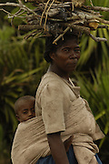 Antandroy woman collecting firewood. The braided and knotted hairstyle is typical of these people. Their traditional houses are made from the Endemic Didiereacaea plants. These 'people of thorns' live in the 'spiny' forests of Southern Madagascar and are mainly cattle herders - their ancestors coming from mainland Africa.<br />