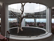 Fig tree growing in centre of restaurant designed by Cesar Manrique, Timanfaya national park, Lanzarote, Canary Islands, Spain