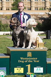 MPs and members of the House of Lords bring their pooches to Parliament as they compete to be crowned The Dogs' Trust and The Kennel Club's Westminster Dog Of The Year. PICTURED: Winner Jonathan Reynolds MP (Labour) Stalybridge and Hyde with his two Labradoodles Clinton and Kennedy.