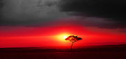 Red Africa sunset with approching rain storm clouds.