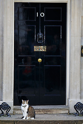 © Licensed to London News Pictures. 24/06/2016. London, UK. Downing Street cat Larry waits outside Number 10 minutes before Prime Minister David Cameron announces the EU referendum results and that he will step down as Prime Minister by October in Downing Street, London on Friday, 24 June 2016. The UK has voted by a narrow margin to leave the European Union. Photo credit: Tolga Akmen/LNP
