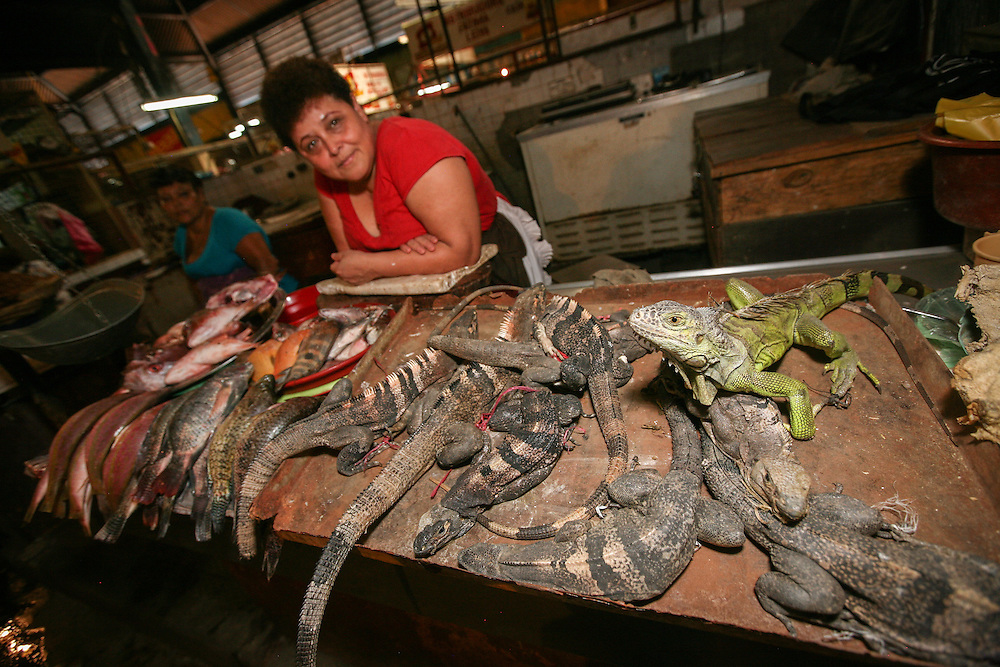 A stallholder shows her collection of iguanas, thought locally to embue special powers to men when eaten as consommé. El Mercado Roberto Huembes in Managua, Nicaragua, is a large market with some 7,500 sellers and other workers. It contains many sections such as fresh fruit and veg, meat, fish, iguanas, piñatas, spices, clothes and cooked food and has its own bus station.