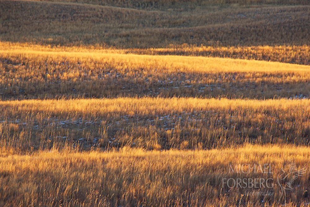 Light dances on the ripples of the sandhills as the grass browns in autumn. Nebraska Sandhills.