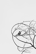 Photo chosen for the Visual Arts 2016 Student Show at UCLA Extension. Black and white photo with small bird perched on bare tree branches. Ballona Wetlands, CA 6.10.15