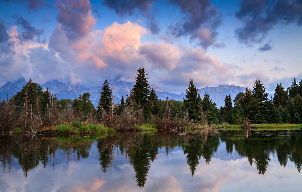 Treeline reflection at Schwabacher Landing in Grand Teton National Park on a late Summer morning.