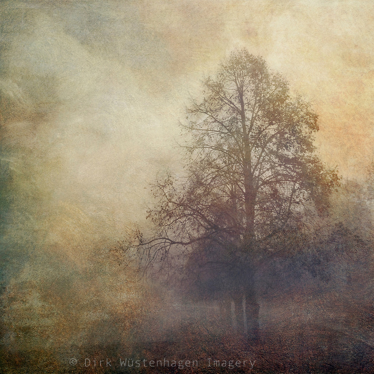 Tree shrouded in mist - painterly romantic version.<br /> Prints &amp; more:<br /> http://society6.com/DirkWuestenhagenImagery/mood-travels_Print
