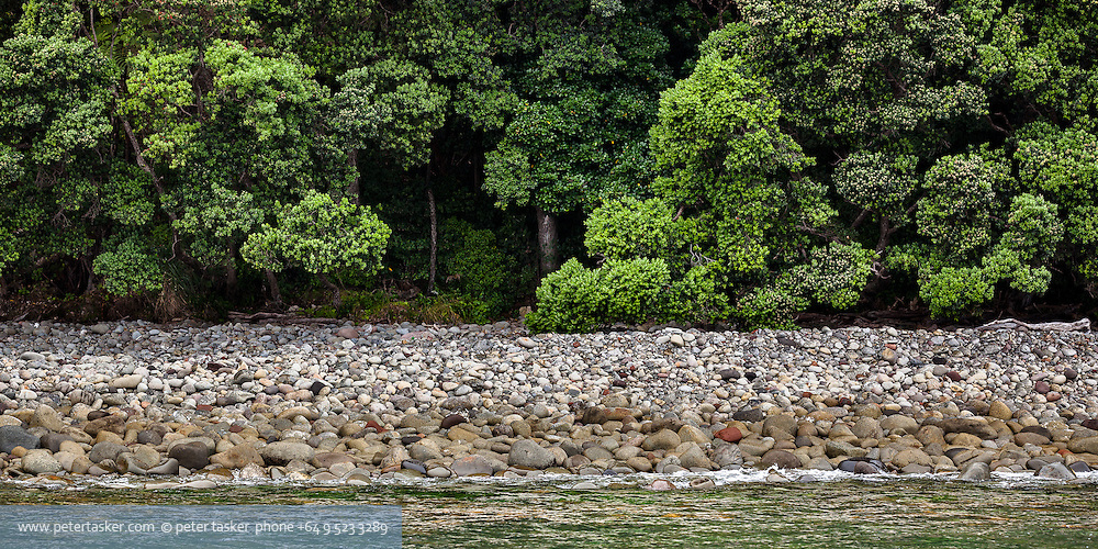 Little Barrier Island.  Bush, bolders and foreshore on an overcast day.