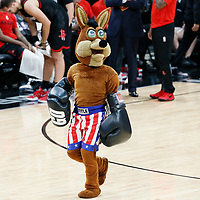 03 May 2017: San Antonio Spurs mascot The Coyote is seen during the San Antonio Spurs 121-96 victory over the Houston Rockets, in game 2 of the Western Conference Semi Finals, at the AT&T Center, San Antonio, Texas, USA.