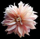 Floral Portfolio I