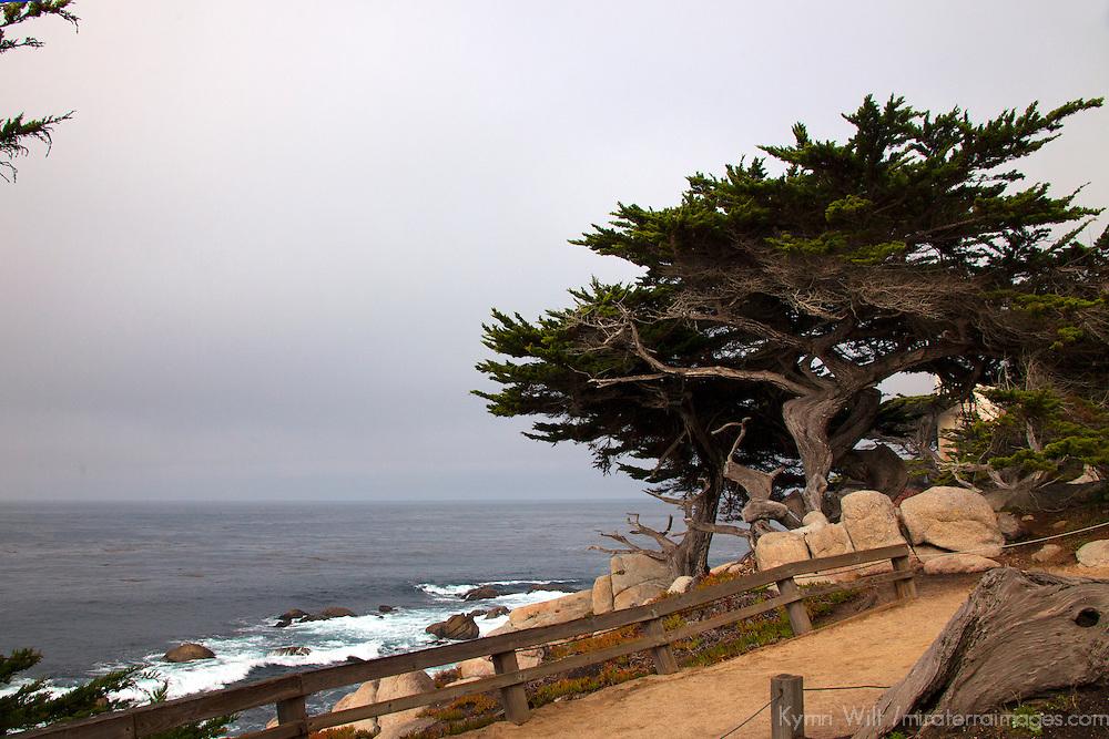 USA, California, Monterey. 17-Mile Drive coast near Ghost Tree.