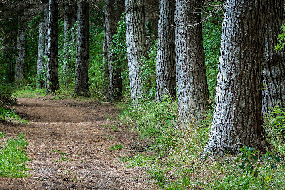 A row of trees lines the trail at Rover Track, at Sandy Point, Invercargill, New Zealand.
