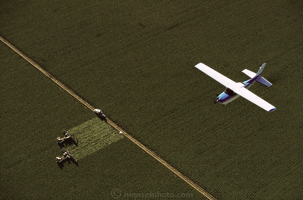 Aerial of John Harris flying his Cessna over his fields where workers are harvesting lettuce at Harris Farms in San Joaquin Valley, California. Two large trucks pull conveyors with farm workers sitting low to the ground, enabling them to cut the lettuce as workers on the trucks pack it in crates as they move through the fields, harvesting 16 rows at a time. USA.