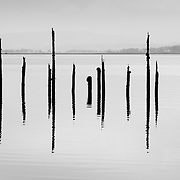 Section of the timber ponds, Inverclyde, Scotland.