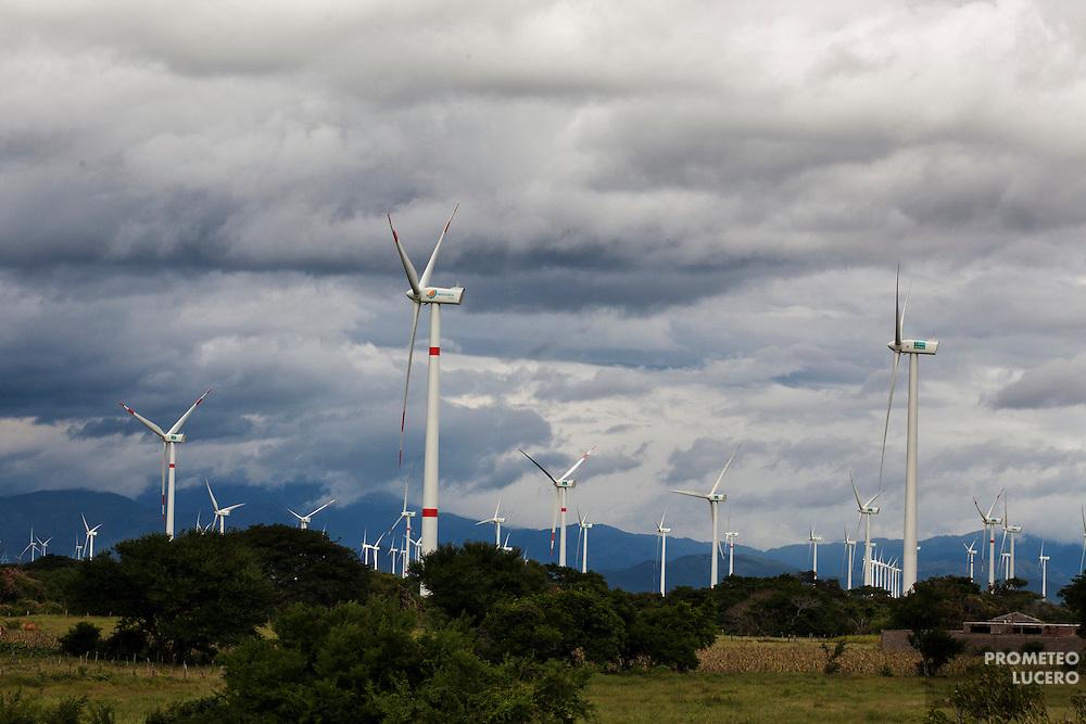 Aerogeneradores vistos desde las alturas de una escuela en Unión Hidalgo. En la localidad hay 124 aerogeneradores. (FOTO: Prometeo Lucero)
