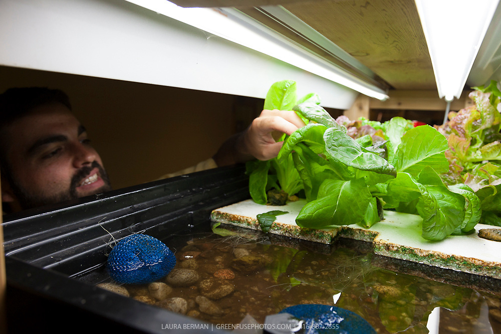Justin Nadeau tends the salad greens and vegetables in an indoor aquaponic system.