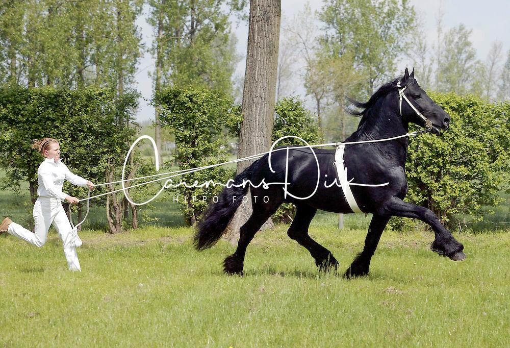 Horse<br /> © Dirk Caremans