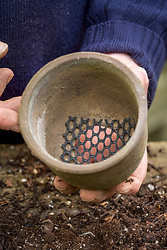 Repotting and dividing a hepatica<br /> Putting gauze over large drainage hole - used to ensure maximum drainage