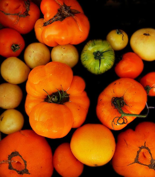 Cit8/11/05 Farm Mkt. 2<br /> ML0209B<br /> Fair Haven Farmer's Market: heirloom tomatoes from Star Light Gardens in Durham. Photo by Mara Lavitt