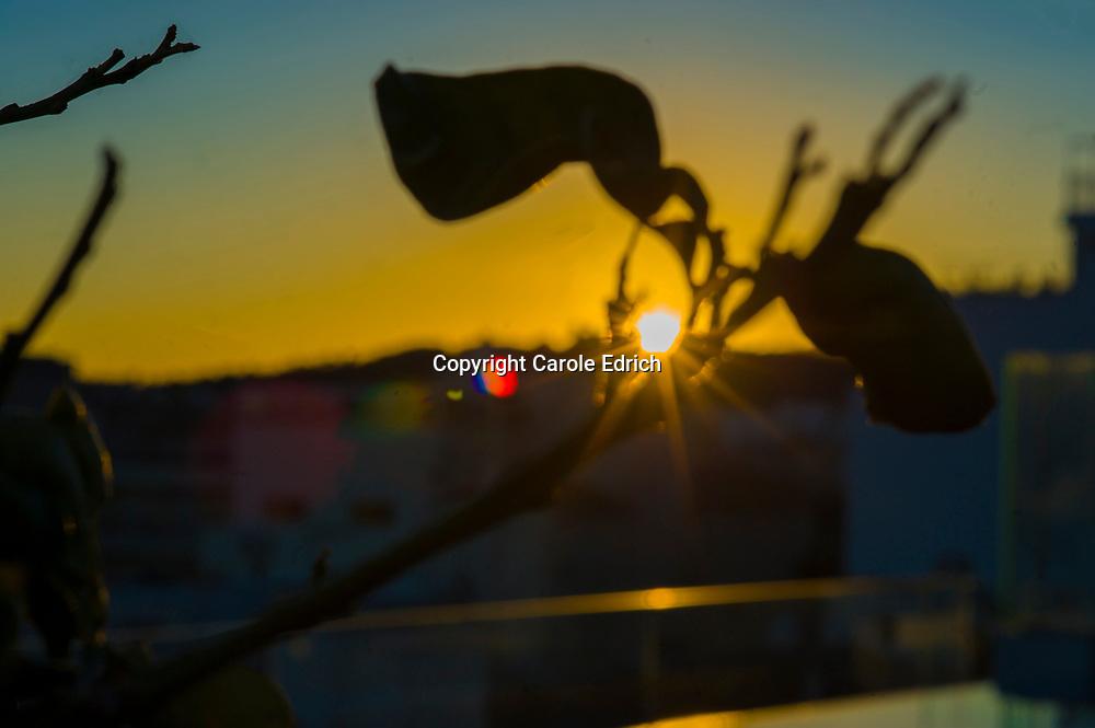 Sunset through plants on the Nakar Hotel roof