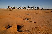 Central Australia Camel Trek