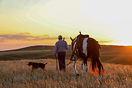 John Zeman,  his German shorthair Louie, and his horse Buckwheat return to camp at sunset during a Montana prairie grouse hunt.