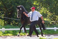Georg Von Stein, (GER), Joy, Lando, Nautilus, Nico T, Odin - Horse Inspection Driving - Alltech FEI World Equestrian Games™ 2014 - Normandy, France.<br /> © Hippo Foto Team - Leanjo de Koster<br /> 25/06/14