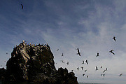 Sea birds fly away.<br />