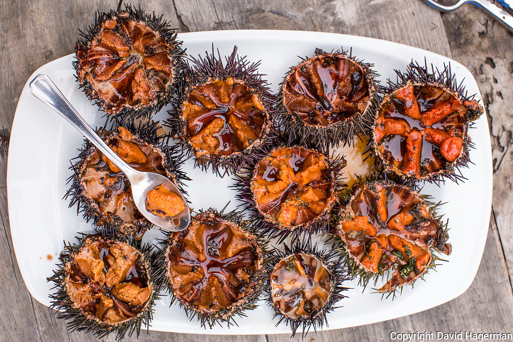 Sea urchins (garotes) opened and cleaned. The orange / brown roe is eaten fresh or prepared into various dishes. Llançà, Spain
