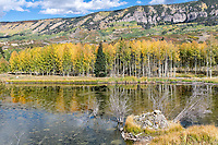 Fall colors near Ridgway, Colorado