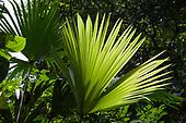 RainforestScapes