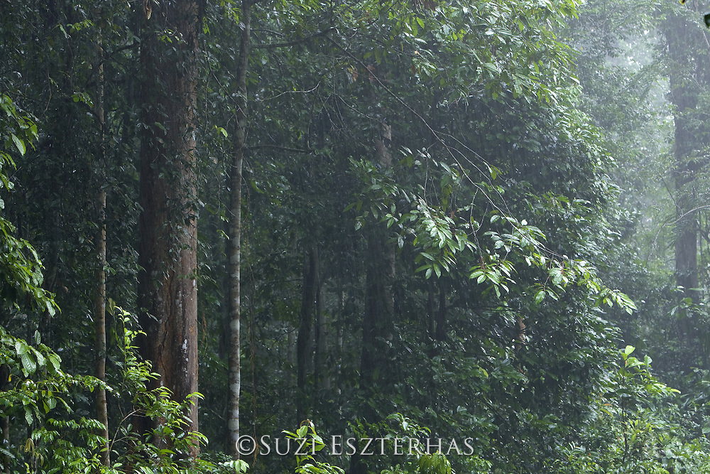 Forest along Kambas River<br /> Way Kambas National Park, Indonesia