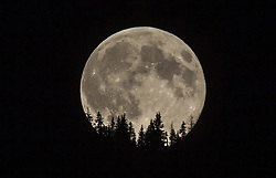 THEMENBILD - der Supervollmond vor Baumspitzen, aufgenommen am 10.08.2014 in Kaprun, Österreich // the Supermoon in the Night in the Sky in front trees, Kaprun, Austria on 2014/08/10. EXPA Pictures © 2014, PhotoCredit: EXPA/ JFK