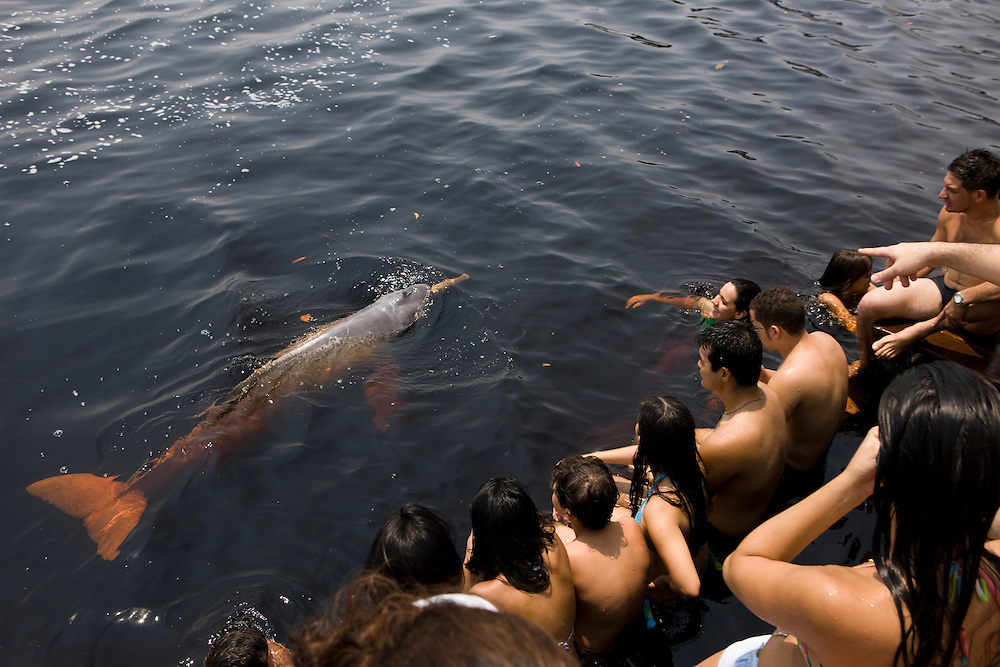 People feed wild Amazon river dolphins (Inia geoffrensis) at Novo Airao  on the Rio Negro branch of Amazon River in Amazonas, Brazil, August 17, 2008. A group of the normally elusive dolphins has been imprinted, 16 of them are used to be fed and swim amongst tourists at the front of a local restaurant on the Rio Negro margin..Daniel Beltra/Greenpeace