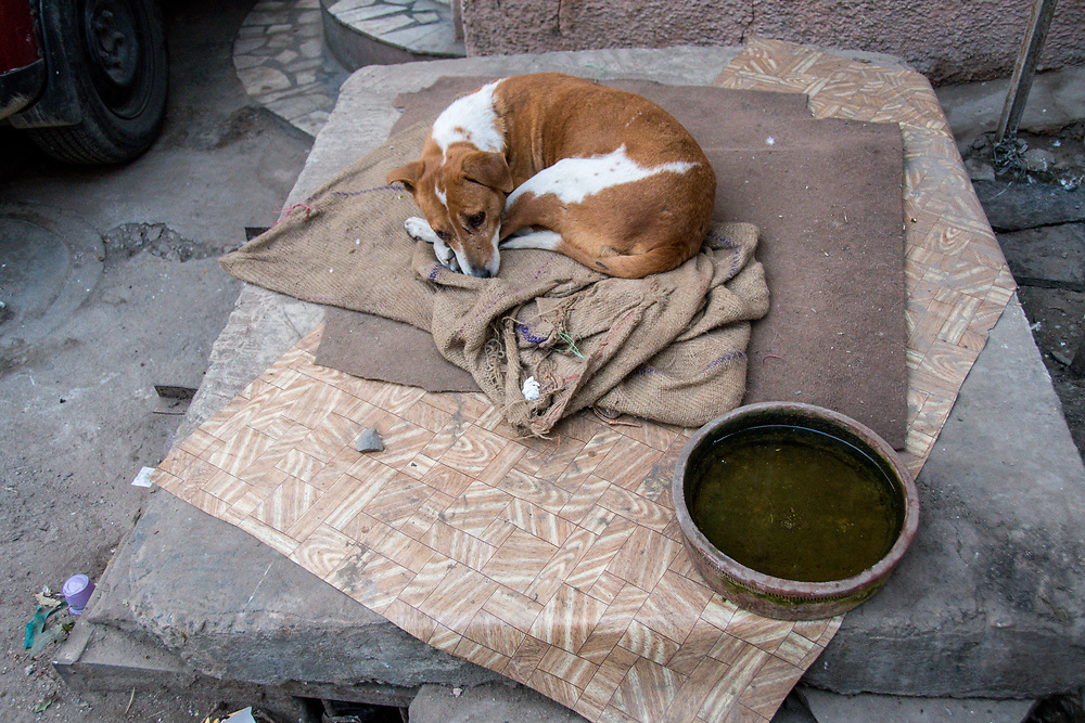 A dog lies on some blankets on the street in New Delhi, India.
