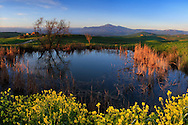 A small pond encircled by beautiful yellow rape flowers, a typical springtime view of the hills between Pienza and Montalcino in Valdorcia, Tuscany, Italy