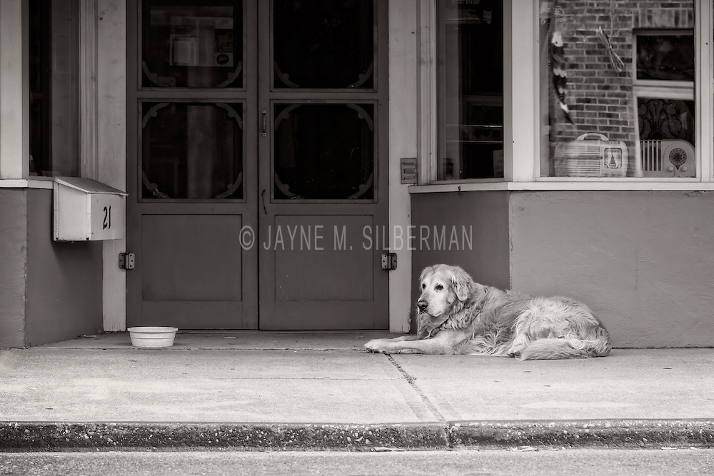 Is this elderly dog waiting for his owner? Phot taken in a small town in Maryland.
