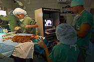 NLD, Niederlande: Rhinoskopie bei einer Maine Coon Katze, eine endoskopische Untersuchung des Nasen- und Rachenraumes, bei der eine Gewebeprobe entnommen wird, auf dem Monitor wird der gesamte Vorgang beobachtet und beurteilt, Universitätsklinik für Gesellschaftstiere, Fakultät der Tierheilkunde, Utrecht | NLD, Netherlands: Rhinoscopy with a maine coon cat, an endoscopic examination of the nose and throat area, a tissue specimen will be taken, on the monitor the whole operation observed and assessed, university clinic for companion animals, faculty of veterinary medicine, Utrecht |