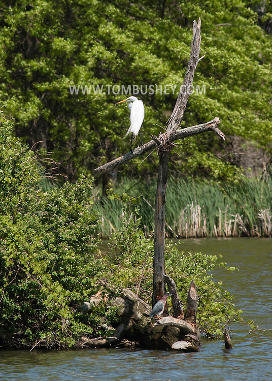 Middletown, New York - Birds at Fancher-Davidge Park on May 11, 2015.