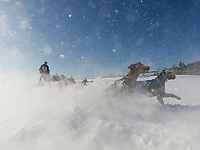 Laconia World Championship Sled Dog races.  Karen Bobotas Photographer