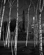Birches, a cypress and the Shard<br /> <br /> February 2016
