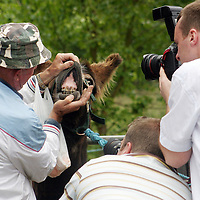 Photographers were in thier element at the Spancilhill Horse Fair on Friday.<br />