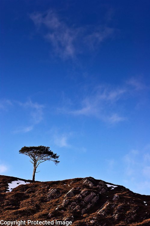 A single lonely tree stands a top the ridge of a hill against a blue sky in the Alladale reserve in Scotland