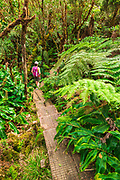 Hiker on the Alakai Swamp Trail, Kokee State Park, Kauai, Hawaii USA