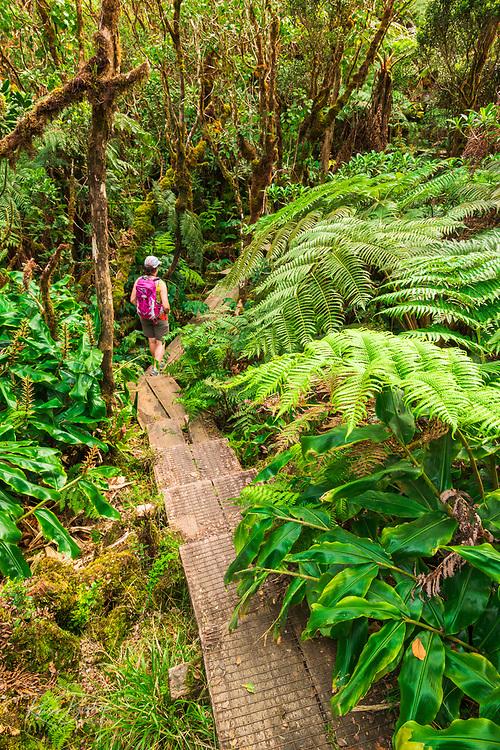 Hiker on the Alakai Swamp Trail, Kokee State Park, Kauai, Hawaii USA