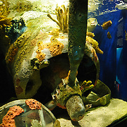 An exhibit at Washington DC's National Aquarium shows an example of a reef forming from World War II wreckage of a plane's engine and propeller. Fish are in the top right. The National Aquarium is in the basement of the Department of Commerce Building, where it has been housed since 1932. Much smaller and less well known than its affiliated facility in Baltimore, Washington's National Aquarium consists of a series of tanks illustrated various types of marine environments, with special emphasis on the many marine sanctuaries in U.S. marine territory.